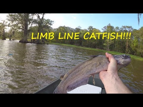 Limb Line Fishing For Catfish - How To Make Limb Lines For Catfish
