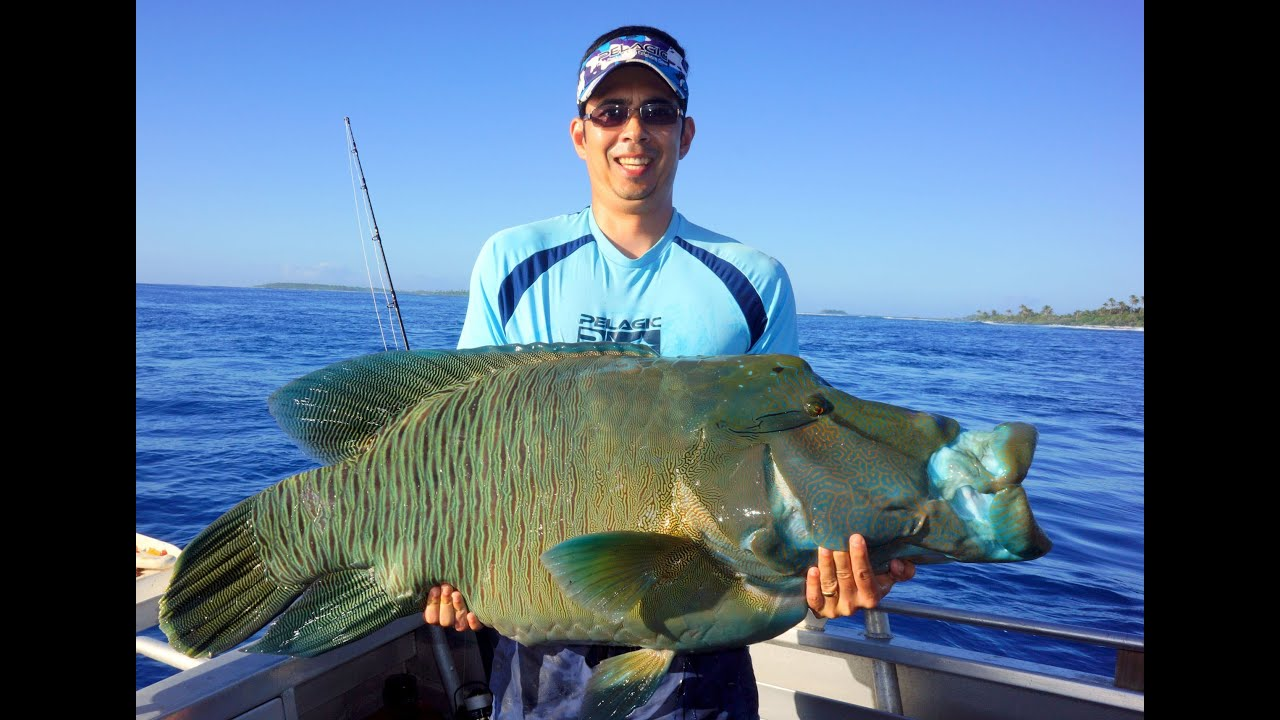 Cook Island Gt Fishing