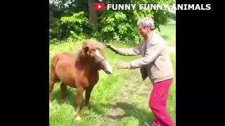 FUNNY HORSE FAILS TRY NOT TO LAUGH