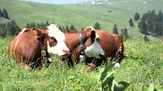 Séjour insolite : immersion dans nos alpages - Haute-Savoie - Région d'Annecy