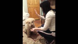 Obedient Girlfriend...and Dog