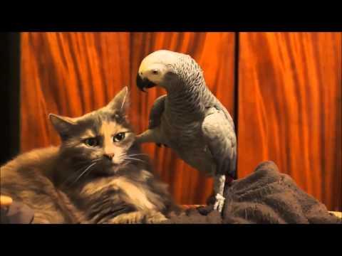 Chat et perroquet