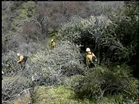 Wildland Fire Chain Saws - Part 9 - Line Construction