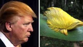 Yo no se que le pasa a Donald Trump por Alexis Valdes.
