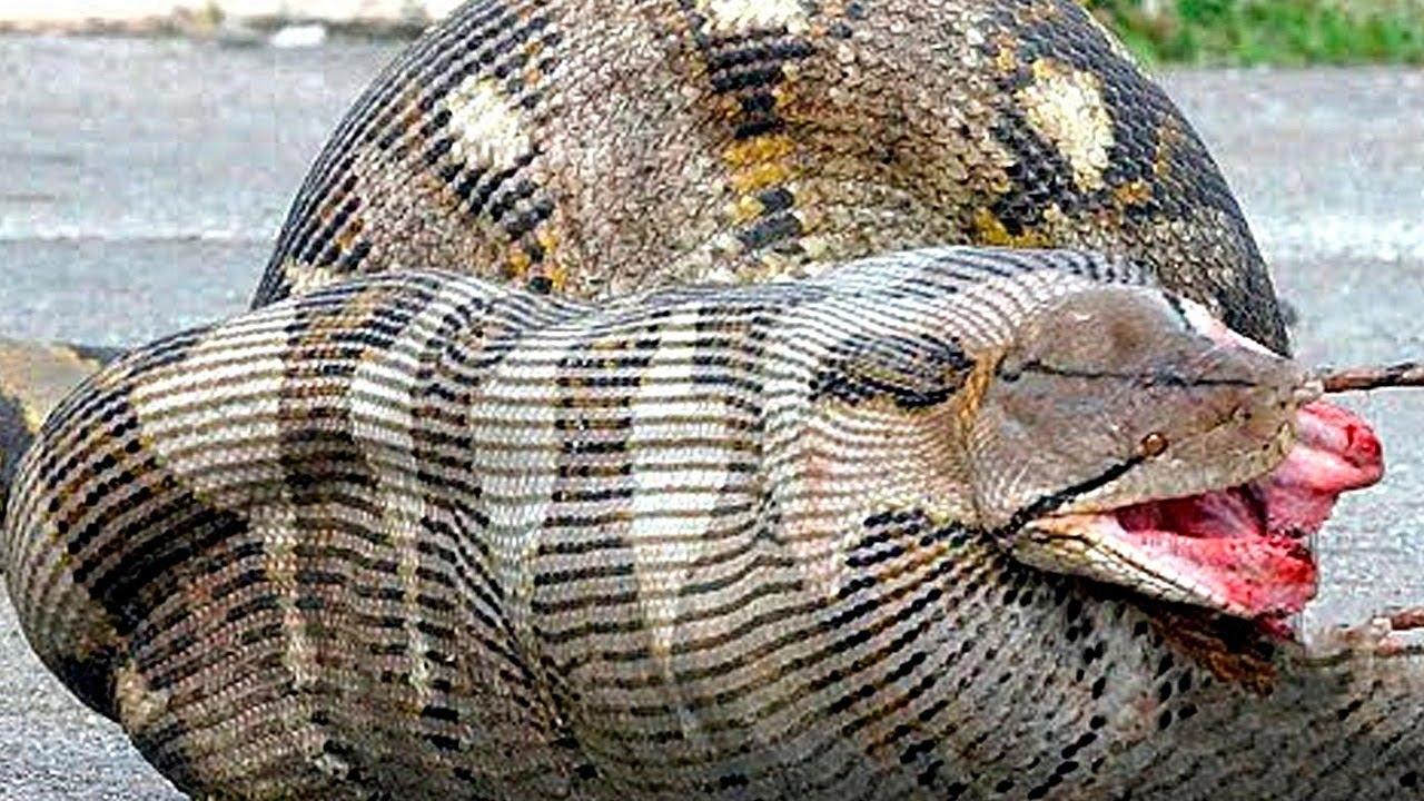 10 Самых Опасных Животных, Которых Вы Увидите в Австралии