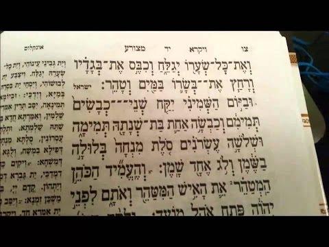 Pearls of Torah   Tazria-Metzora and Isaiah 53