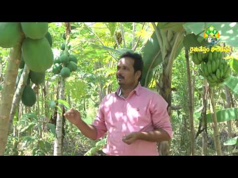 Palekar 5 Layers method cultivation by Ellareddy - Natural Farming-9959742741