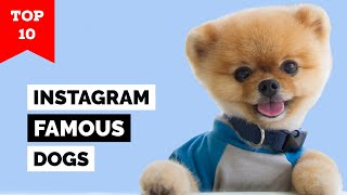 Top 10 Famous Dogs On Instagram With Highest Followers