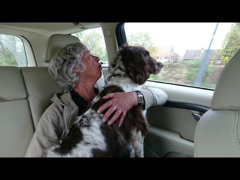 Springer Spaniel Who Lived In A Small Cage For Years Adopted By Loving Family