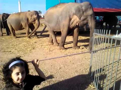 éléphant-de-casablanca-al-hank-cirque-monté-carlo