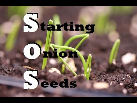 how to start seeds indoors youtube