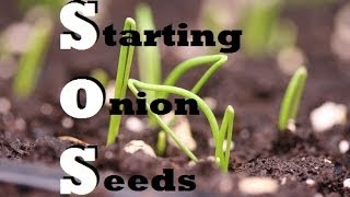 How to Start Onions Indoors - Growing from seed