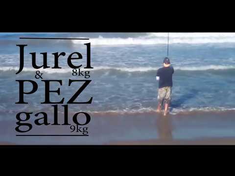Pesca De Jurel Toro Y Pez Gallo En México.