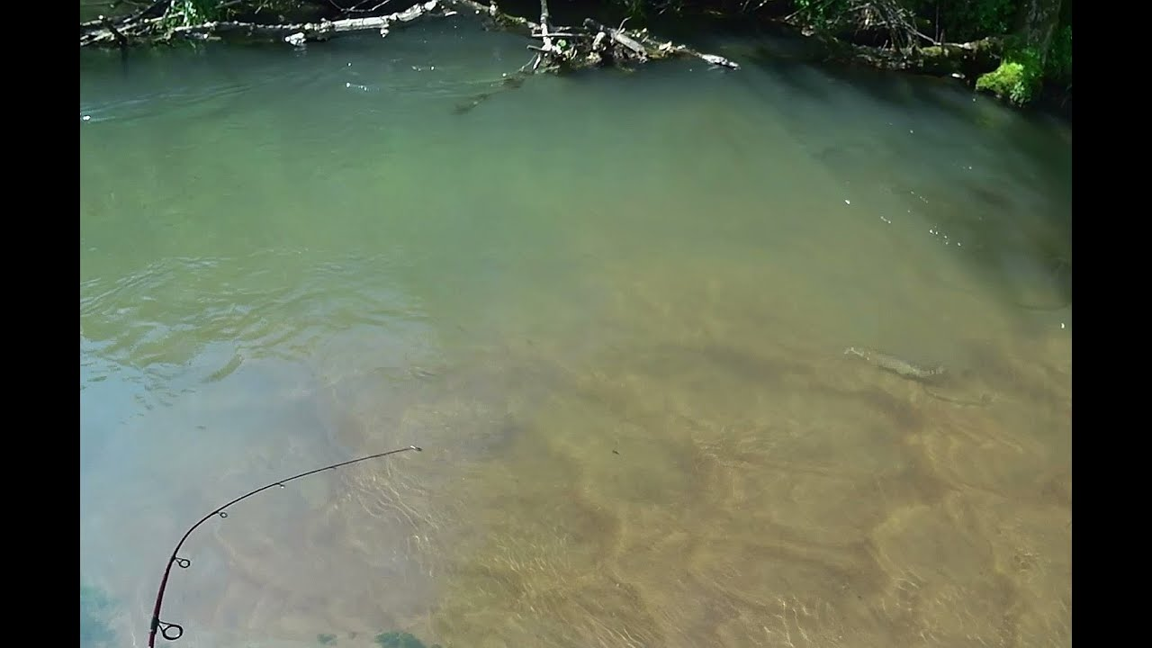 Wisconsin Trout Fishing - 6/5/2021