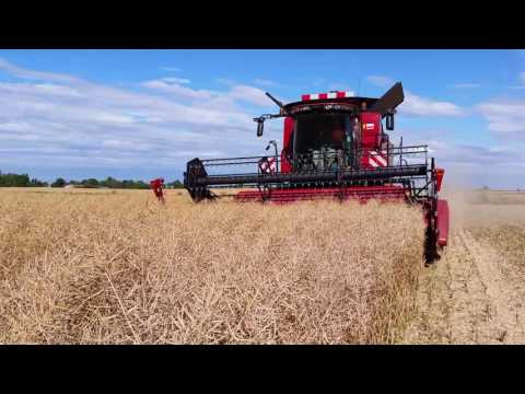 Rzepak 2016 z CASE Axial-Flow 5140