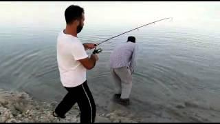 Fırat Turnasi avi
