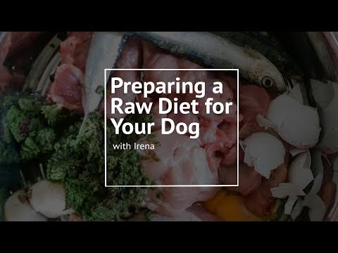 Feeding Your Dog a Raw Diet