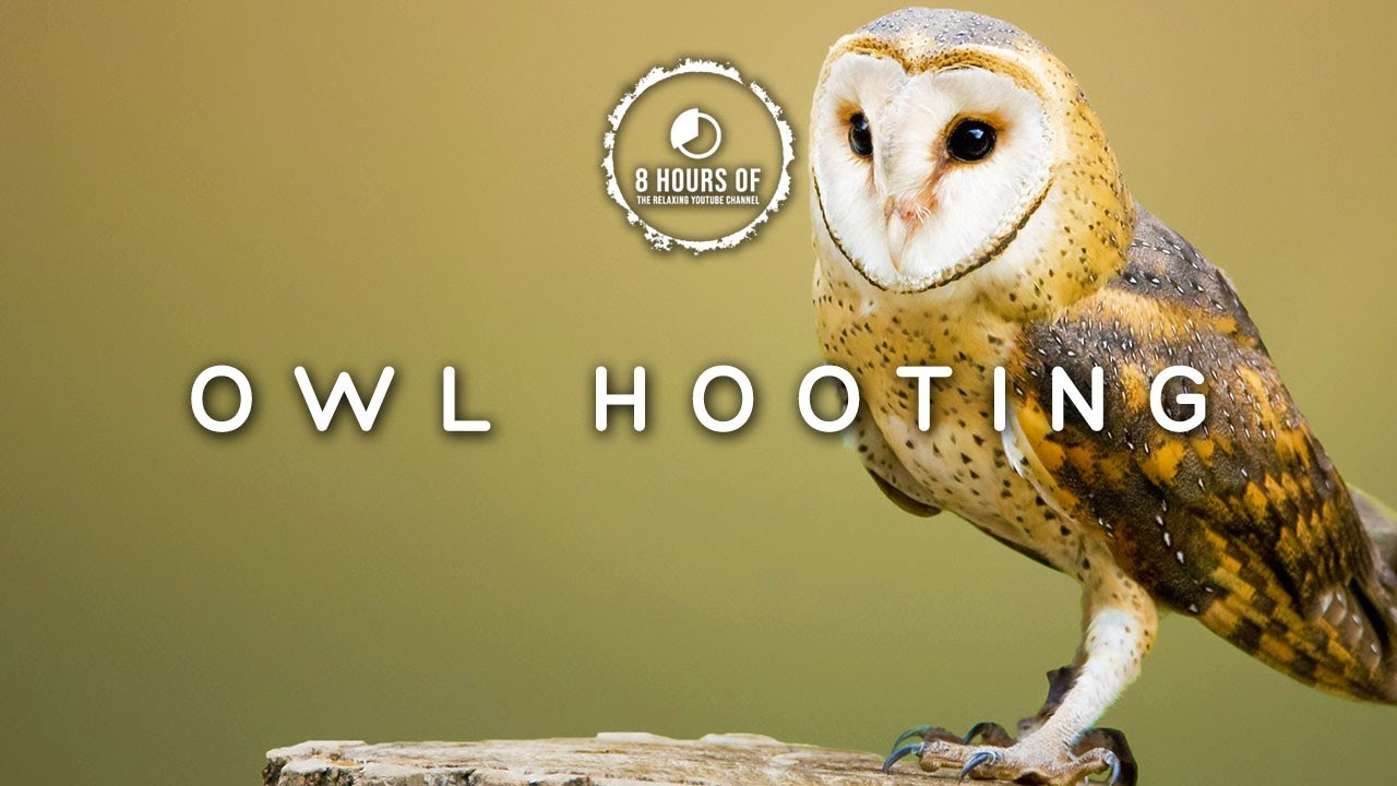 OWL SOUNDS, OWL NOISES & HOOTING, OWL SOUND EFFECT AT NIGHT, HOO SOUNDS TO  SCARE BIRDS FOR 8 HOURS