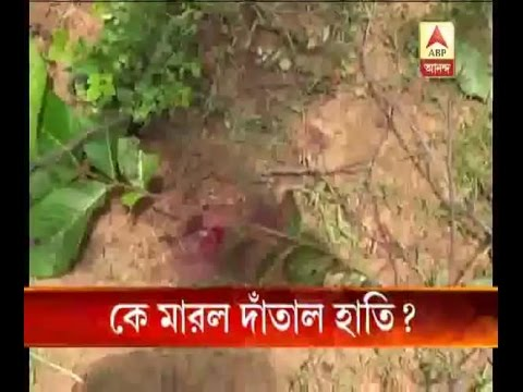 Mysterious death of a tusker elephant at Bankura