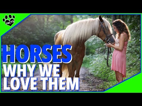 Why Do We Love Horses So Much? - Animal Facts 4K Special
