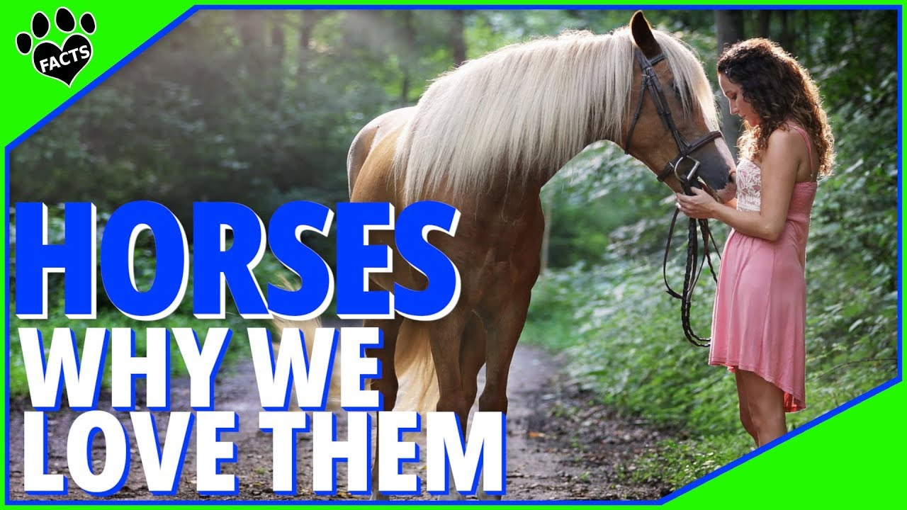 Why Do We Love Horses So Much? The Truth