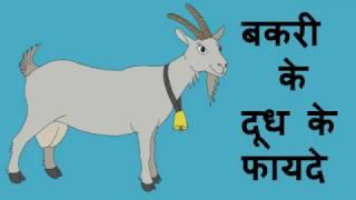 बकरी के दूध के ये 10 आश्चर्यजनक फ़ायदे | 10 benefits of goat milk hindi
