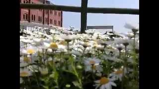 横浜赤レンガ倉庫のイベント(FLOWER GARDEN 2014)で広場に綺麗な花壇...
