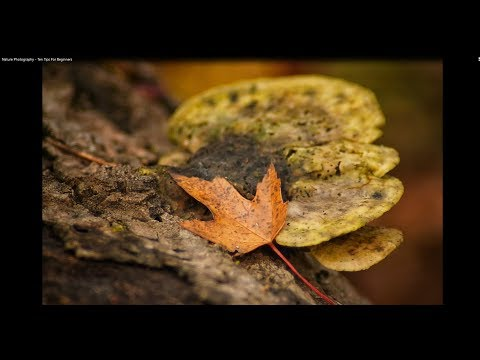 Nature Photography - Ten Tips For Beginners