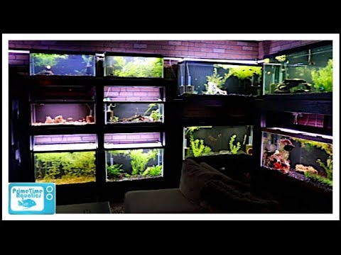 How to Keep Aquarium Glass Clean and Algae Free WITHOUT Scraping Glass!