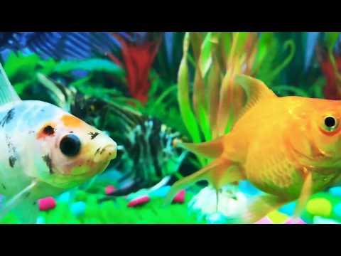 Maine Chhaani Ishq Ki Gali Song Whatsapp Status Aquarium S