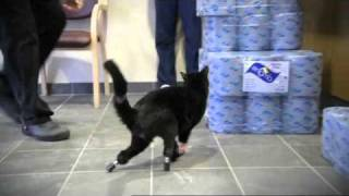 The Bionic Vet - Oscar the Cat