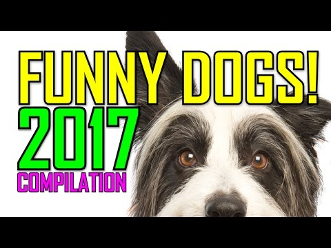 FUNNY DOGS COMPILATION! NEW 2017!