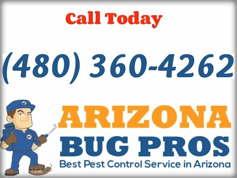 Termite Inspection Glendale, AZ (480) 360-4262