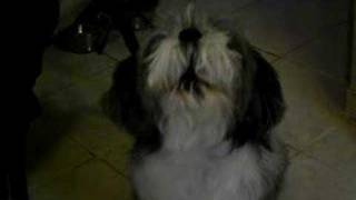 My cousin's dog barking to the sounds of the phone.. adorable!