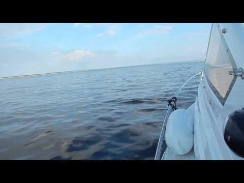 """Дельфин лодка """"Морской Кот"""" СФ620 ИП Прозоров Череповец-2"""