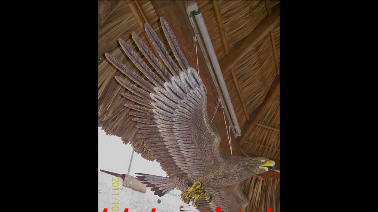 Aguila de papel mache youtube for Como hacer una pileta de material paso a paso