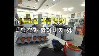 [토요일 풀영상] 할아버지-달걀-만삭흰둥이-편의점 점심-소나타vs말리부?