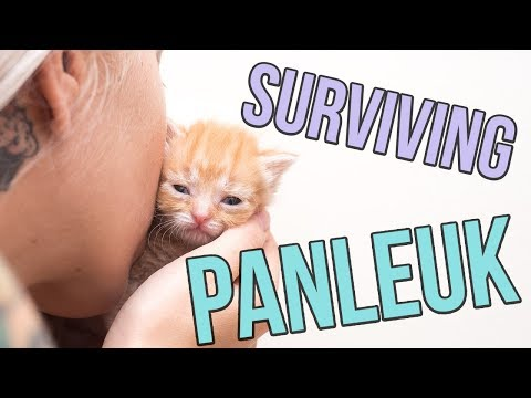 Fighting Panleukopenia, a Deadly Cat Virus