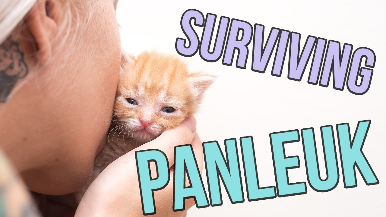 fighting-panleukopenia-a-deadly-cat-virus