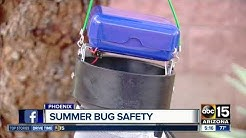 How to fight summer bugs in Arizona