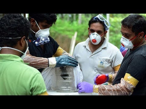 Nipah Virus: Here's everything you wanted to know | Economic Times