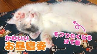 子猫のぽてとの可愛いお昼寝姿