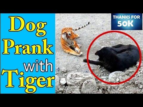 Dog? vs ? tiger || Dog reaction| Funny dog|| dog reacting to tiger dol| Prank on Dog with fake Tiger