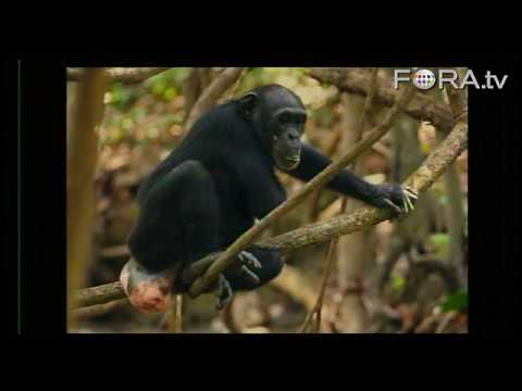 Our Chimp Ancestry - Frans Lanting and Christine Eckstrom