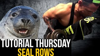 Trainings Tutorial Thursday  - Seal Rows für ein perfektes Muskelgefühl im Rücken