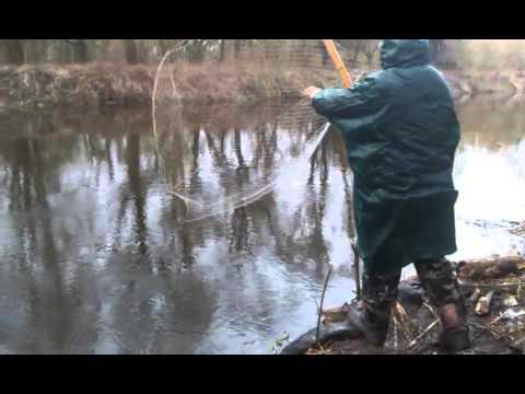 как ловить карася сачком