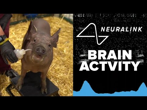 FULL REVEAL! Elon Musk's Neuralink chip tested live in pig brains