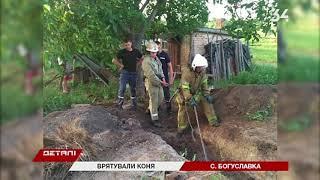 На Днепропетровщине 5 спасателей доставали из погреба лошадь