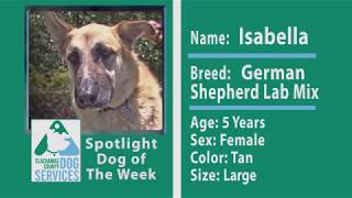 Dog of the Week: Isabella