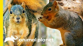 How Do Squirrels Find Their Nuts? | How Do Animals Do That?